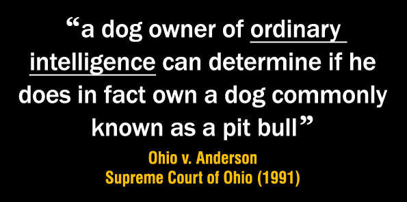 A dog owner of ordinary intelligence can determine if he does in fact own a dog commonly known as a pit bull dog
