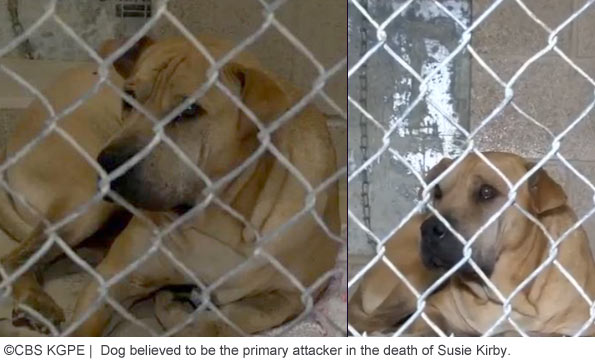 Two dogs a mix of Shar-pei and pit bull kill baby in Fresno