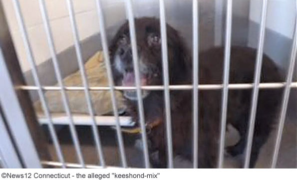 keeshound-mix brutally attacks owner of eight years