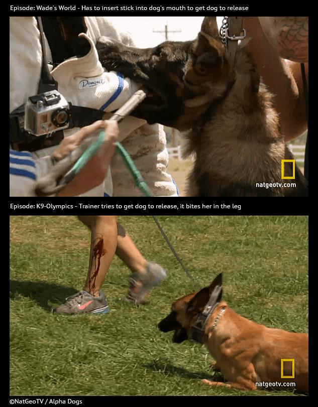 Dog Training In Logan