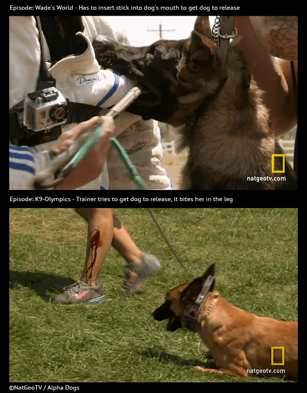 Dog Bite Training Video