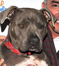 Cesar Millan's pit bull denied entrance into Ontario