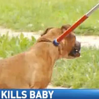 pit bull kills baby in Dayton