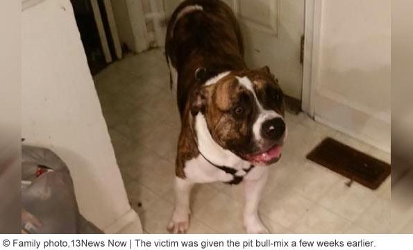 pit bull kills owner north carolina