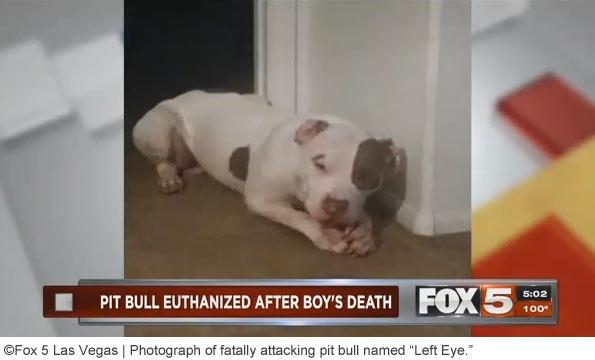 pit bull named left eye kills boy in las vegas