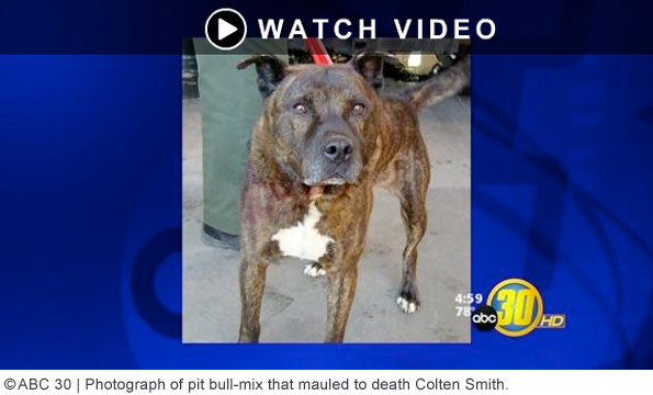 pit bull mix killed colten smith