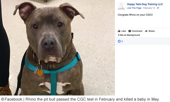 pit bull that passed Canine Good Citizen kills baby