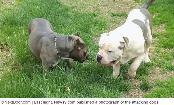 pit bull that killed cecille short oklahoma city