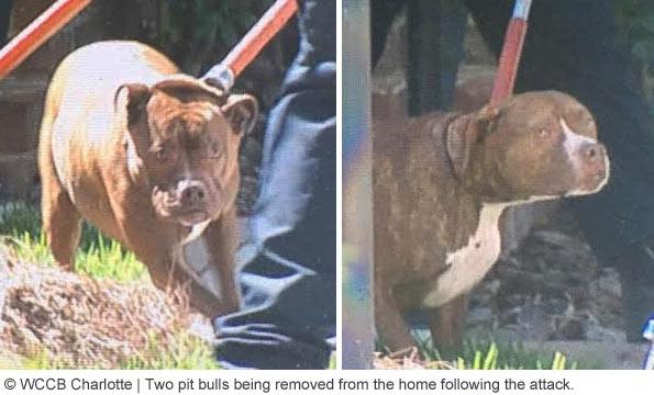 pit bulls that killed Bessie Flowers