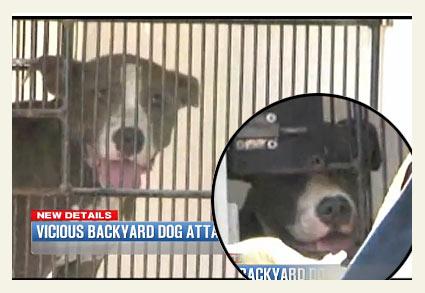 pit bulls maul to death Juan Campos of Katy, Texas