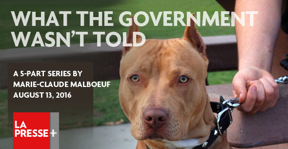 What the government was not told, montreal pit bull ban
