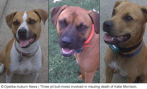 Steve Klemetti's pit bulls
