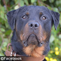 dodge county boy killed by protection trained rottweiler