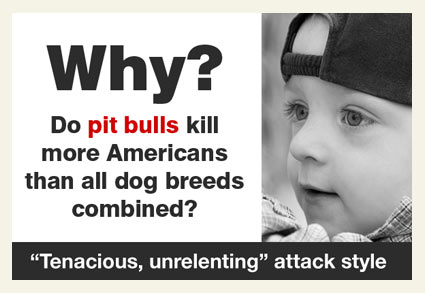 Fatal pit bull attacks sharply rise in 2013 - Pledge to become informed