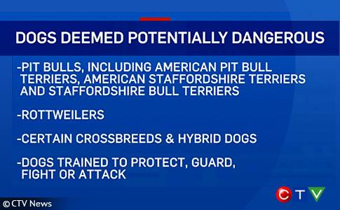 Quebec Government Introduces Legislation to Ban Pit Bulls
