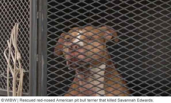 rescue pit bull kills girl in shawnee county, near topeka