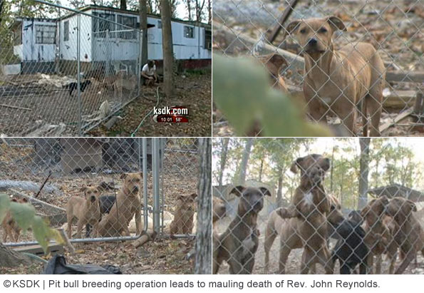calloway county, pit bull breeding operation leaving Reverend john reynolds dead