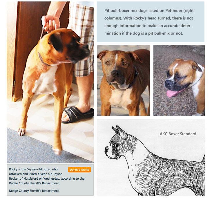 2010 Dog Bite Fatality Dog Kills Visiting 4 Year Old Girl In Dodge