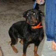 Crystal River fatal rottweiler attack
