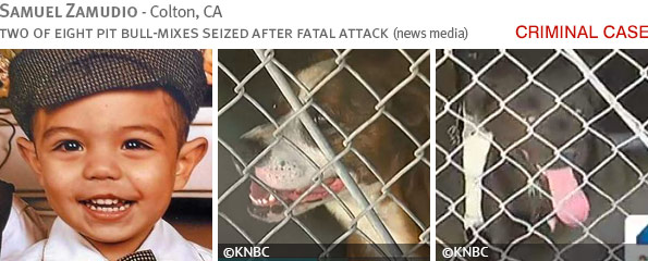Fatal pit bull attack - Samuel Zamudio photo