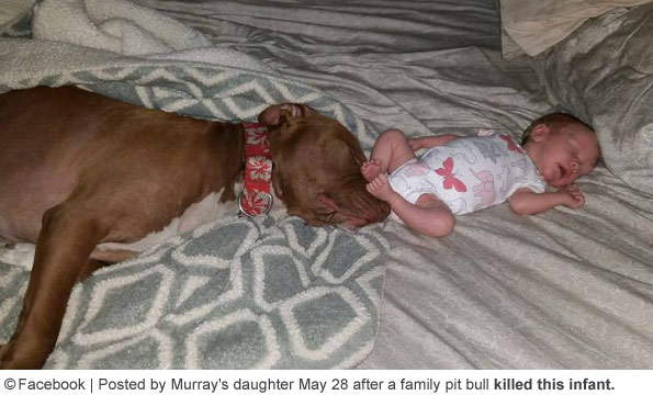 Michelle Murrays baby before being killed by family pit bull