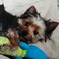 Two men and dog attacked by pit bull on Ventura Boulevard