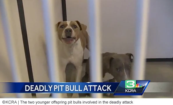 east stockton pit bull attack