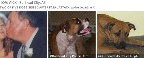 Fatal boxer attack - Tom Vick photo