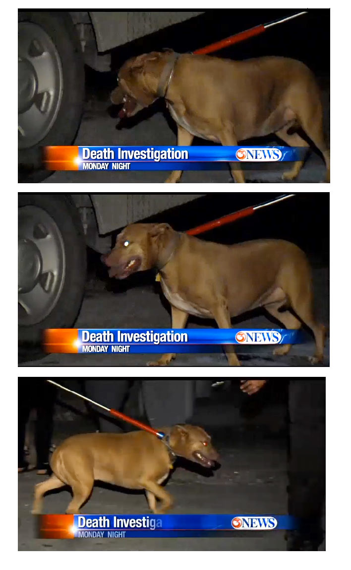 should people be allowed to keep pit bull dogs