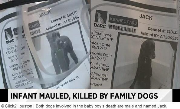 family dogs kill baby in north houston