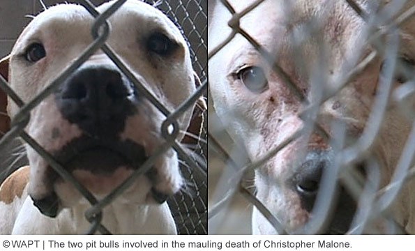 family pit bulls killed christopher malone in holmes county