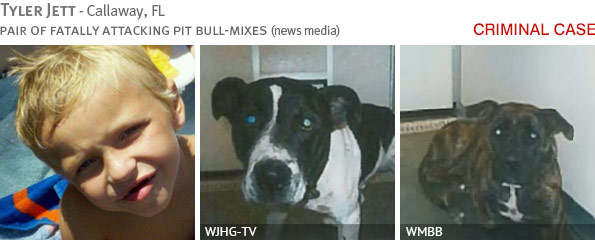 Fatal pit bull attack - Tyler Jett photo
