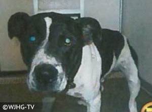 pit bull type dog that killed Tyler Jett