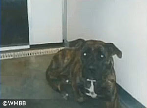 pit bull type dog that killed Tyler Jett