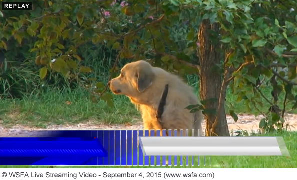 Live streaming after Autauga County fatal dog attack on September 4